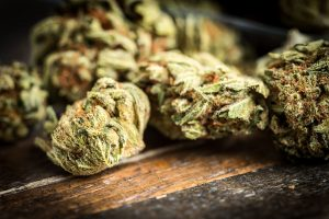 high quality cannabis flower buy online