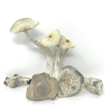 magic mushrooms white wizard bunch of mushrooms